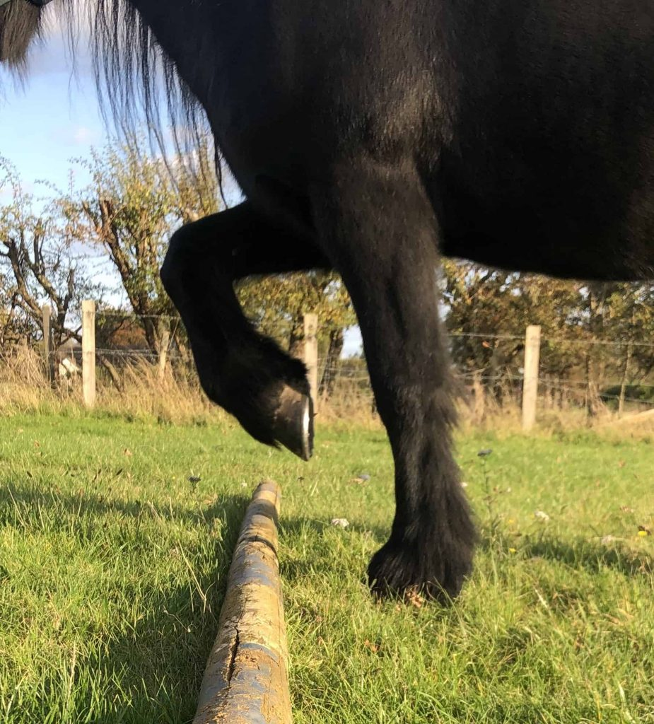 Horse Exercise equine rehabilitation