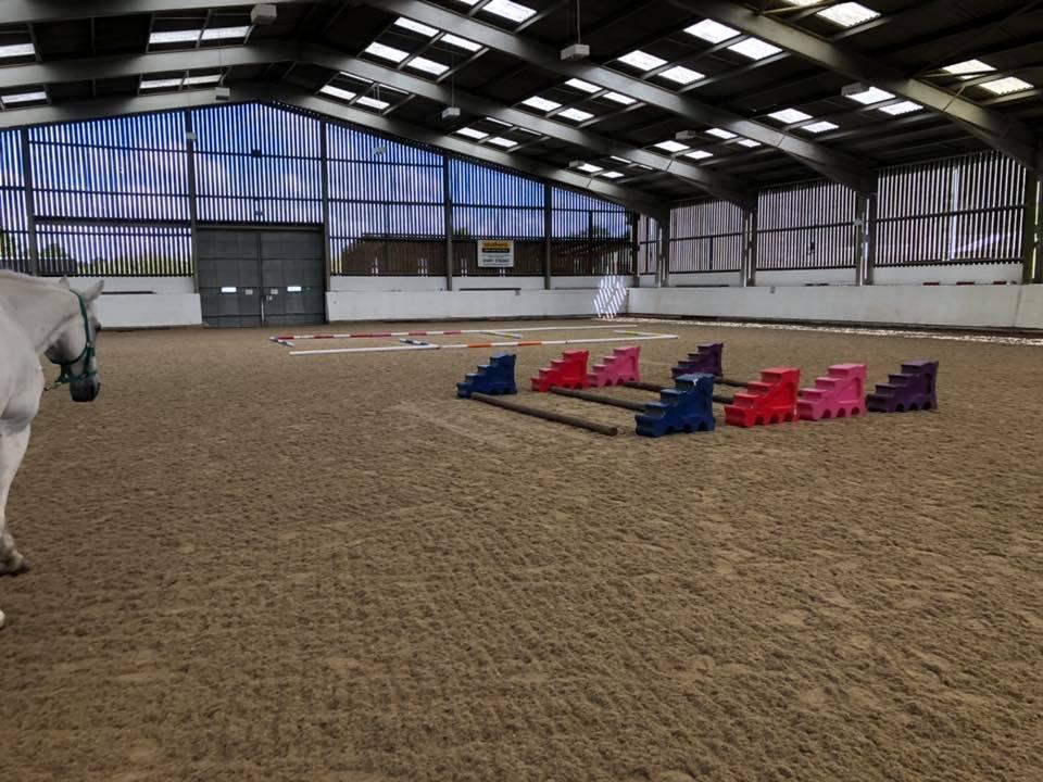 Horse equine rehabilitation