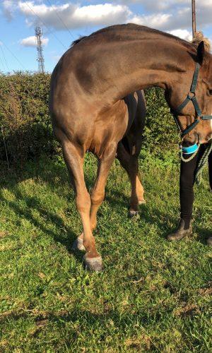 Virtual one to one equine rehabilitation